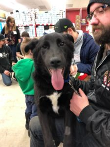 WANAR K9 Rescue Adoption Day